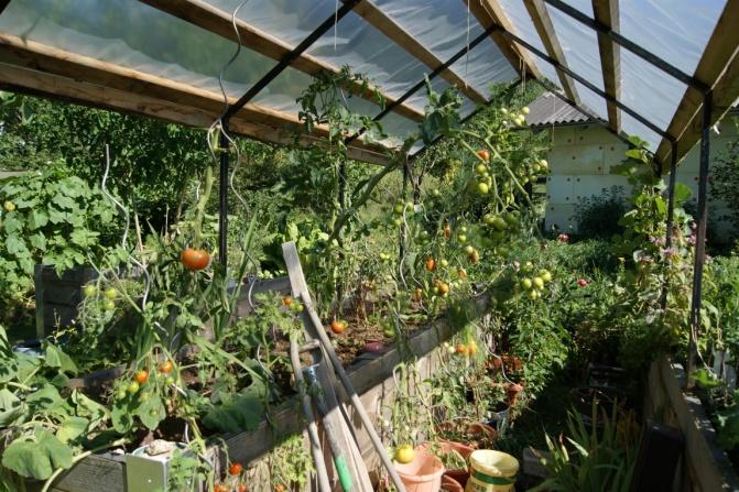 hochbeet bepflanzen tomaten garten design ideen um ihr. Black Bedroom Furniture Sets. Home Design Ideas